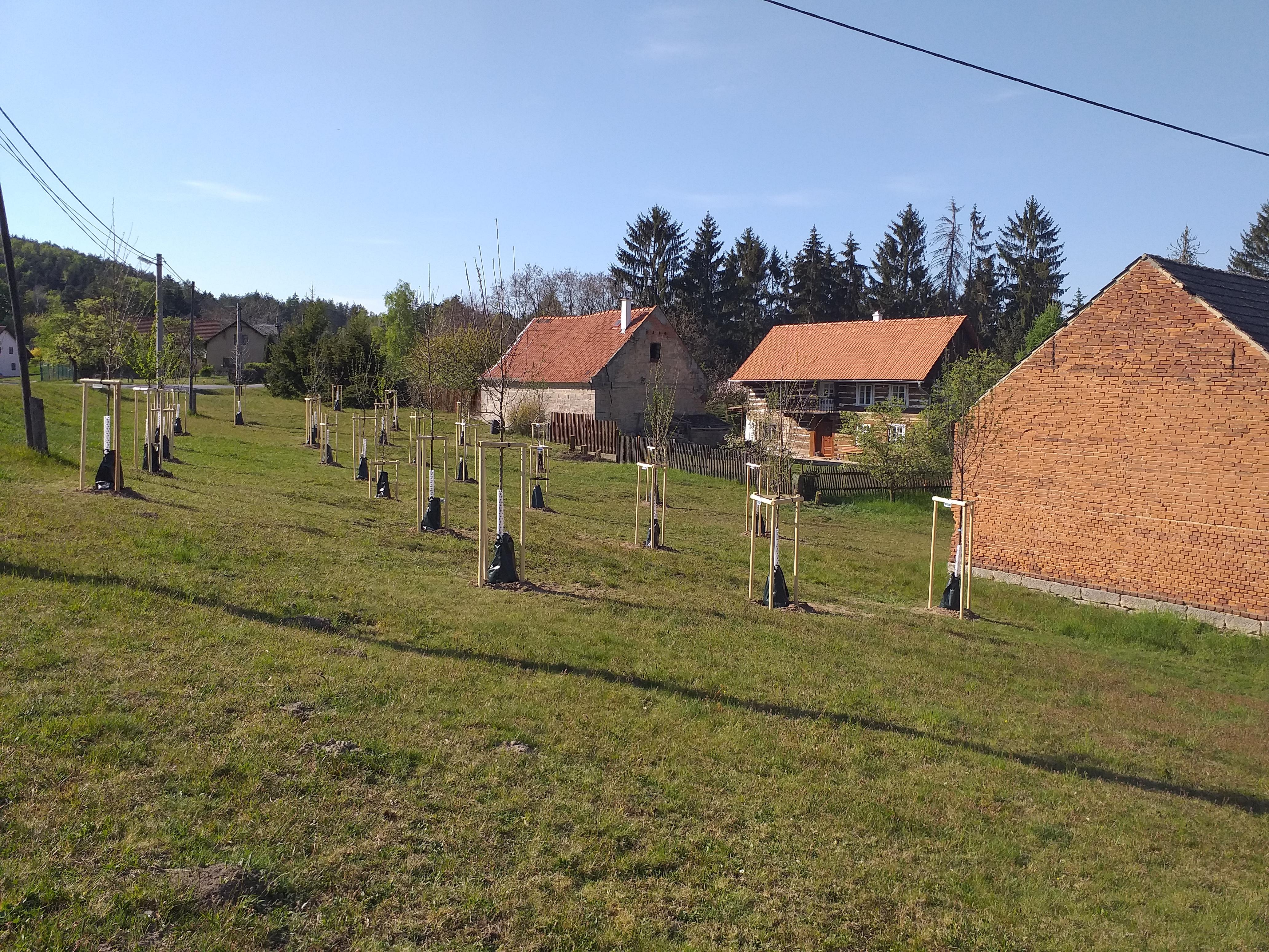 Fotografie Obecního ovocného sadu-Sázení stromů (25.04.2020) v Nosálově - dotace SFŽP